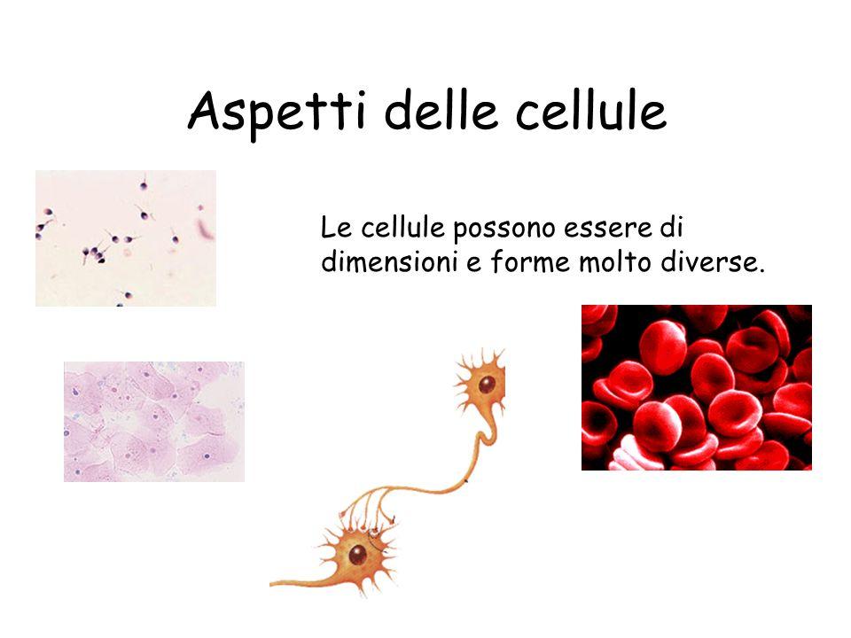 Alcune delle più piccole cellule batteriche sono oggetti cilindrici con un asse maggiore lungo meno di un micrometro (un milionesimo di metro).