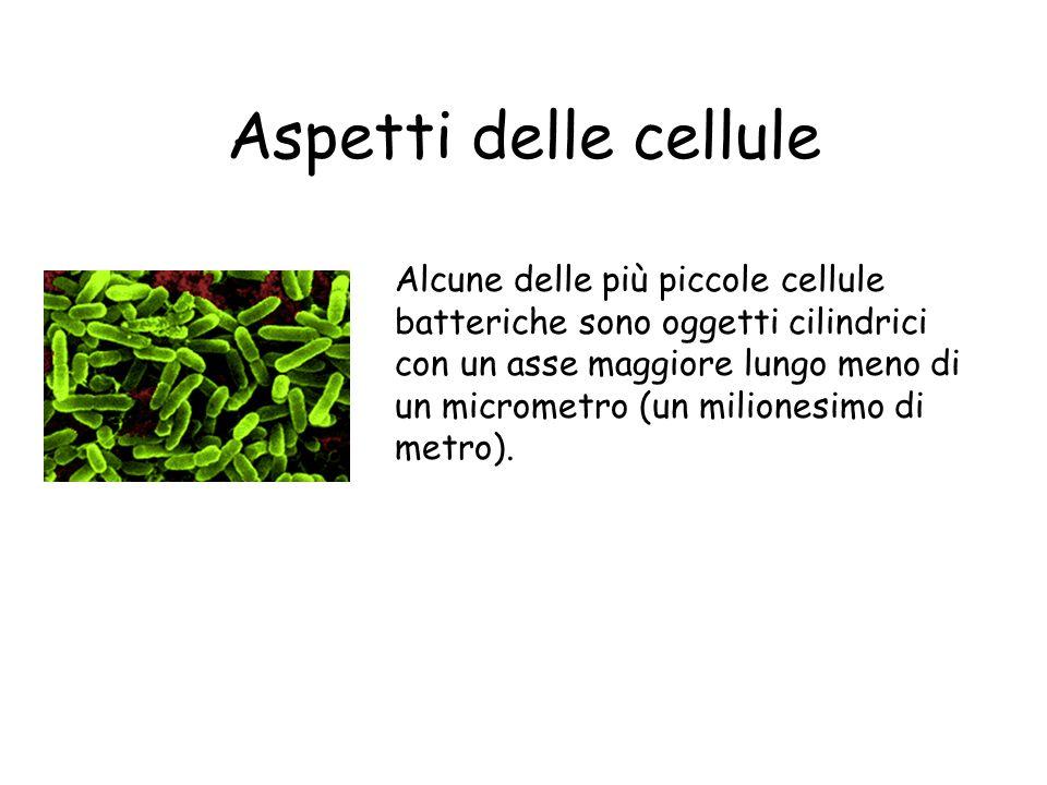 Cellula Vegetale Eucariote