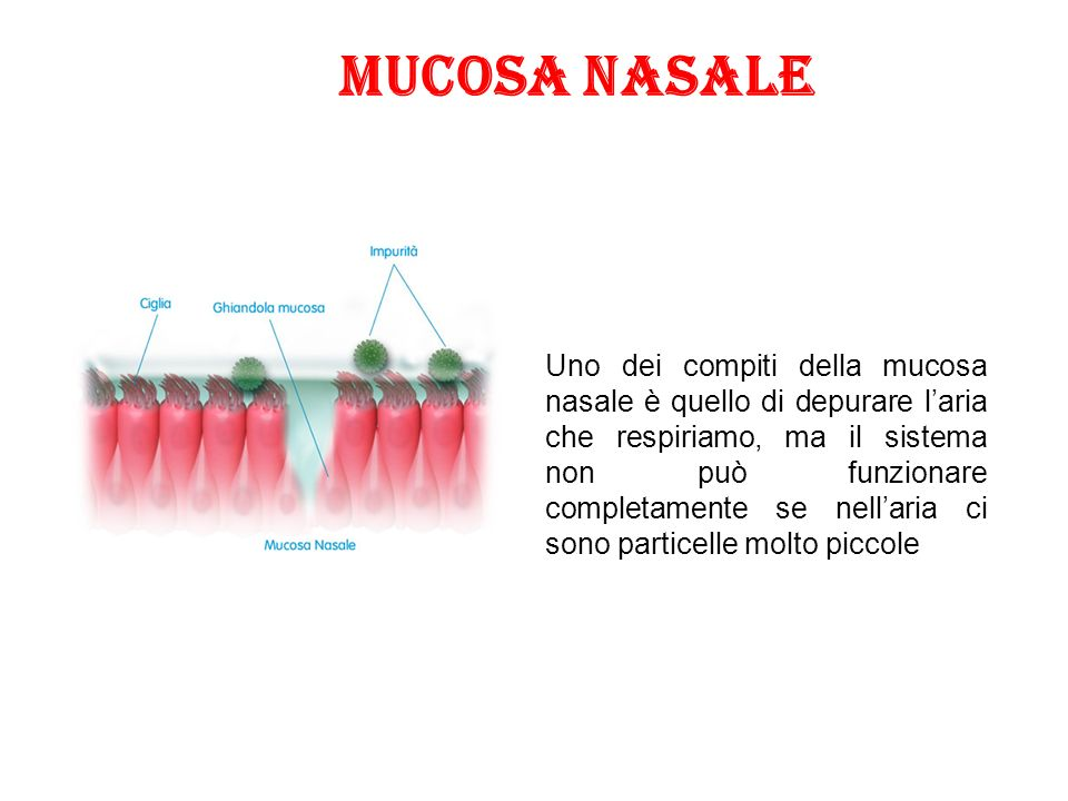 Uno dei compiti della mucosa nasale è quello di depurare l'aria che respiriamo, ma il sistema non può funzionare completamente se nell'aria ci sono particelle molto piccole Mucosa nasale