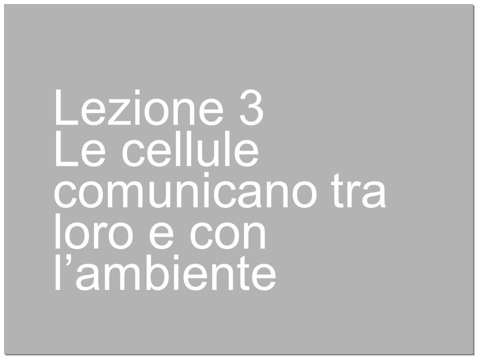 10 Lezione 3 Le cellule comunicano tra loro e con l'ambiente
