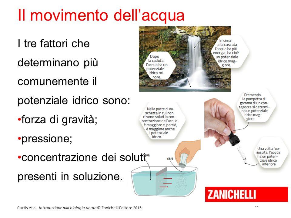 11 Curtis et al. Introduzione alla biologia.verde © Zanichelli Editore 2015 Il movimento dell'acqua I tre fattori che determinano più comunemente il p
