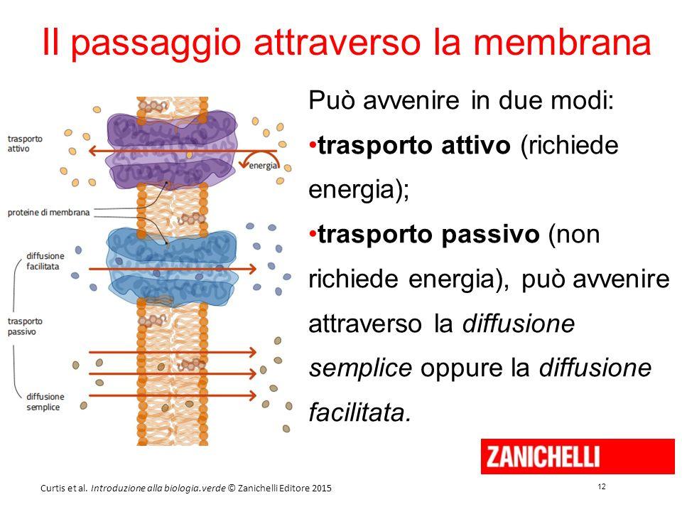 12 Curtis et al. Introduzione alla biologia.verde © Zanichelli Editore 2015 Il passaggio attraverso la membrana Può avvenire in due modi: trasporto at
