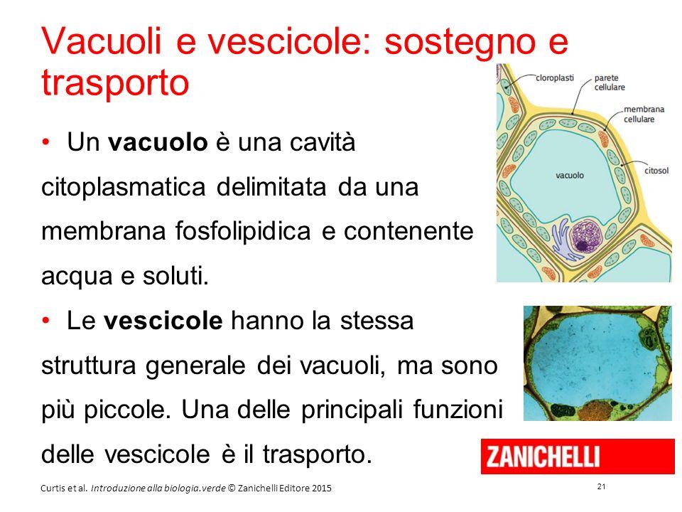 21 Curtis et al. Introduzione alla biologia.verde © Zanichelli Editore 2015 Vacuoli e vescicole: sostegno e trasporto Un vacuolo è una cavità citoplas