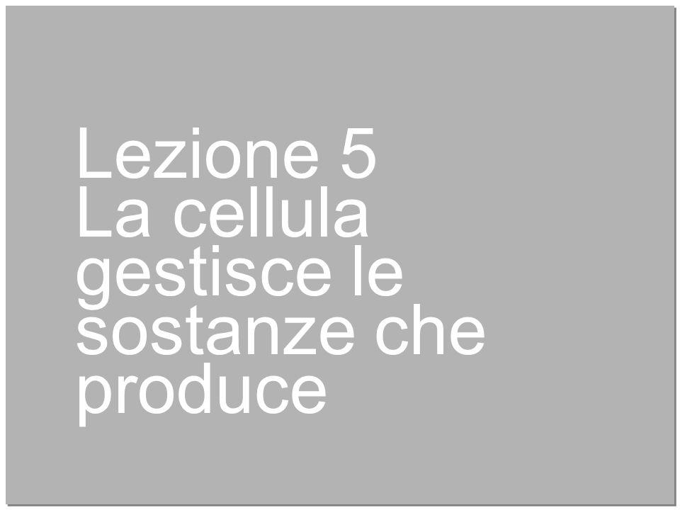 23 Lezione 5 La cellula gestisce le sostanze che produce