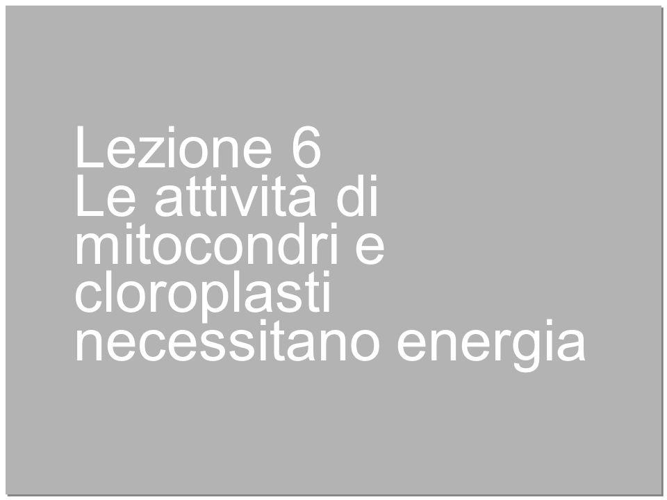 26 Lezione 6 Le attività di mitocondri e cloroplasti necessitano energia