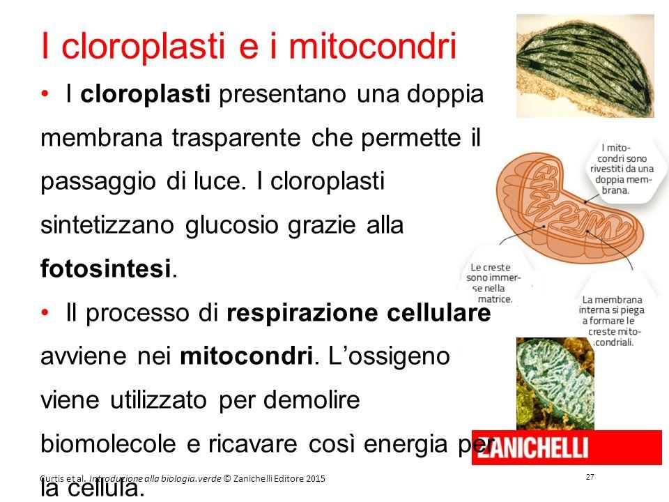 27 Curtis et al. Introduzione alla biologia.verde © Zanichelli Editore 2015 I cloroplasti e i mitocondri I cloroplasti presentano una doppia membrana