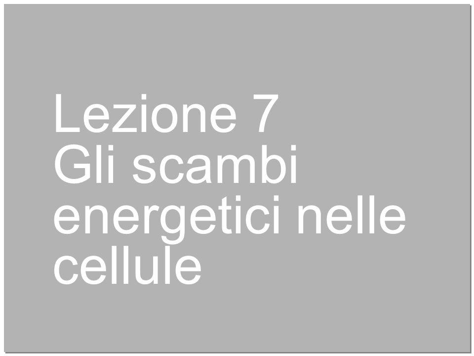 28 Lezione 7 Gli scambi energetici nelle cellule