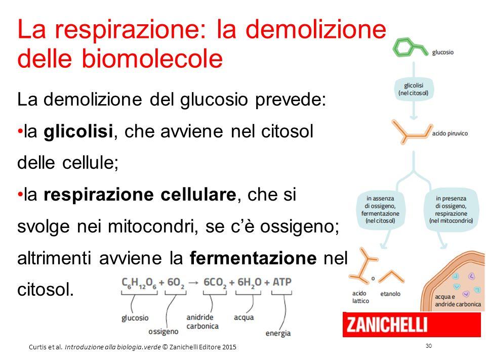 30 Curtis et al. Introduzione alla biologia.verde © Zanichelli Editore 2015 La respirazione: la demolizione delle biomolecole La demolizione del gluco