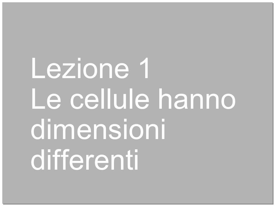 4 Lezione 1 Le cellule hanno dimensioni differenti
