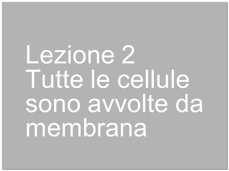 7 Lezione 2 Tutte le cellule sono avvolte da membrana