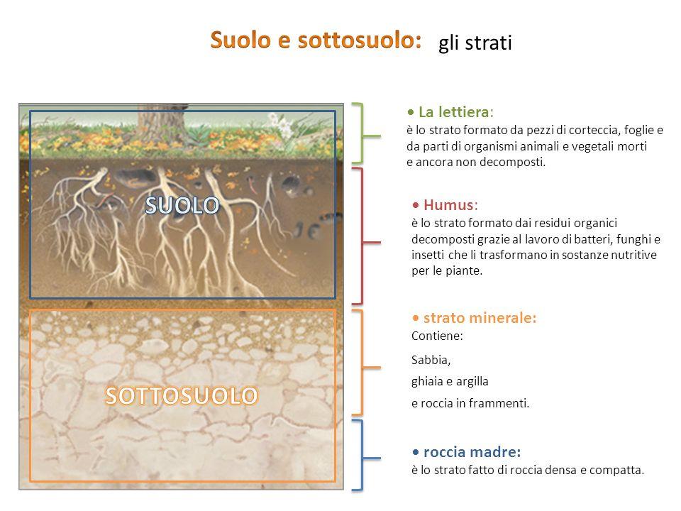 Che cos'è il suolo? Il nostro pianeta è racchiuso da una «buccia sottile» chiamata crosta terrestre sulla quale tutti noi viviamo Il suolo è la parte