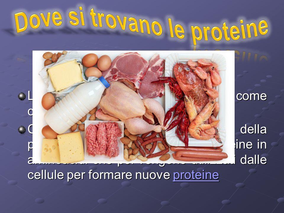 Le proteine si trovano in alimenti come carne, uova, legumi, latte e pesci Con la digestione (per mezzo della peptasi) l'organismo separa le proteine in aminoacidi che poi vengono utilizzati dalle cellule per formare nuove proteine proteine
