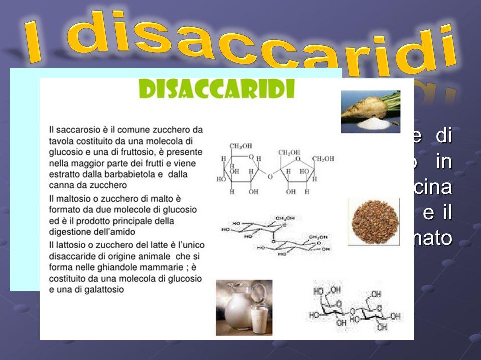 I disaccaridi sono formati dall'unione di due monosaccaridi e comprendono in saccarosio, il comune zucchero da cucina che è formato da glucosio e fruttosio e il lattosio o zucchero del latte, formato dall'unione di glucosio e galattosio
