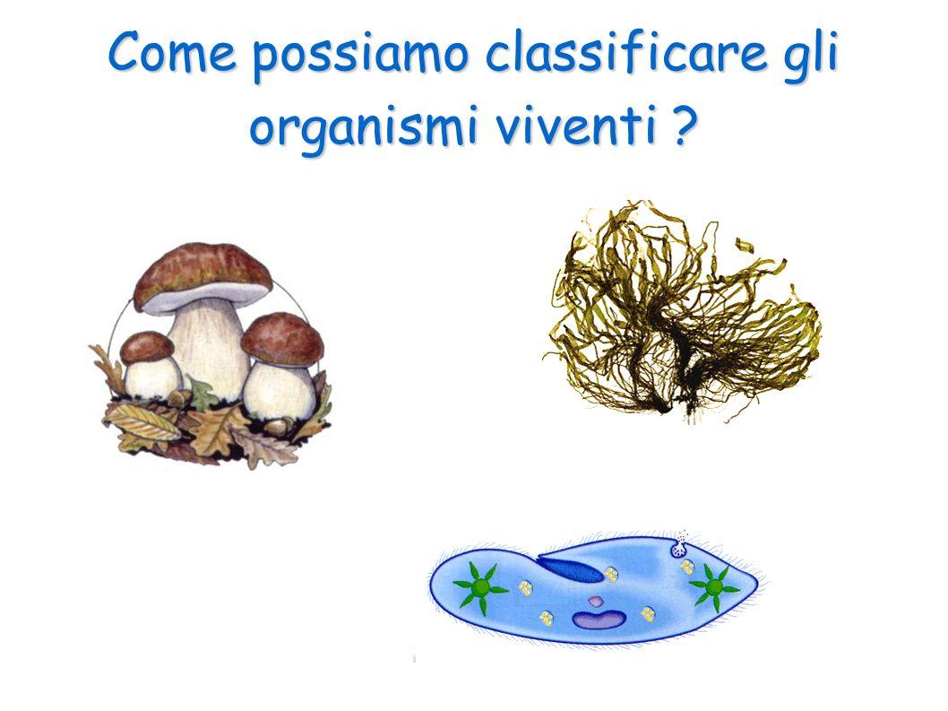 I funghi La cellula dei funghi possiedeo la parete cellulare come quelle dei vegetali ma non ha la clorofilla né i cloroplasti.