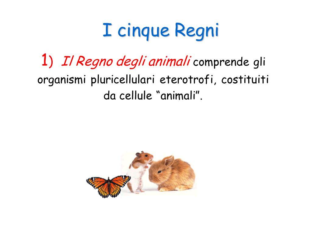 I cinque Regni 2) Il Regno delle piante comprende gli organismi pluricellulari autotrofi, costituiti da cellule vegetali.