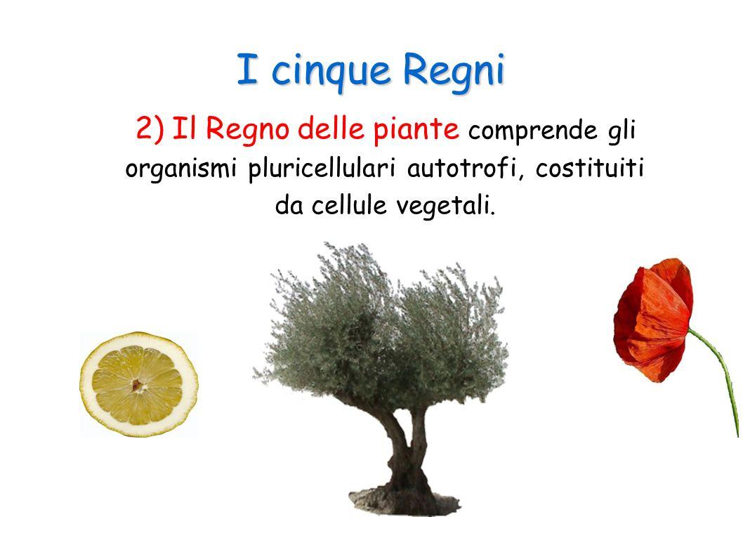 I cinque Regni 3) Il Regno dei funghi è costituito da organismi eterotrofi, sia pluricellulari che unicellulari, aventi una cellula del tipo vegetale ma senza cloroplasti.