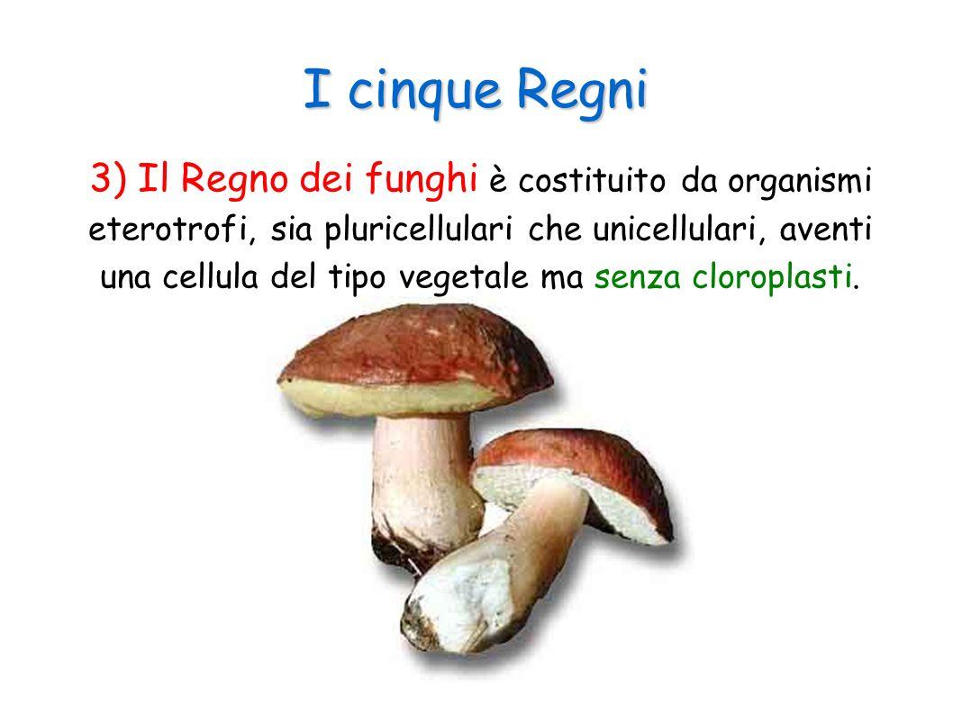 Funghi microscopici I lieviti hanno una grande importanza a livello economico perché a loro sono dovute molte trasformazioni degli alimenti.