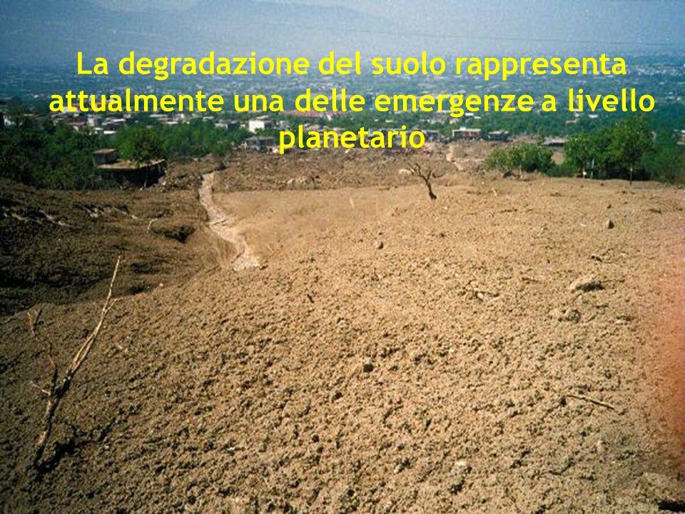 Erosione catastrofica dopo il livellamento e lo scasso (Da Paolo Bazzoffi, 2007)
