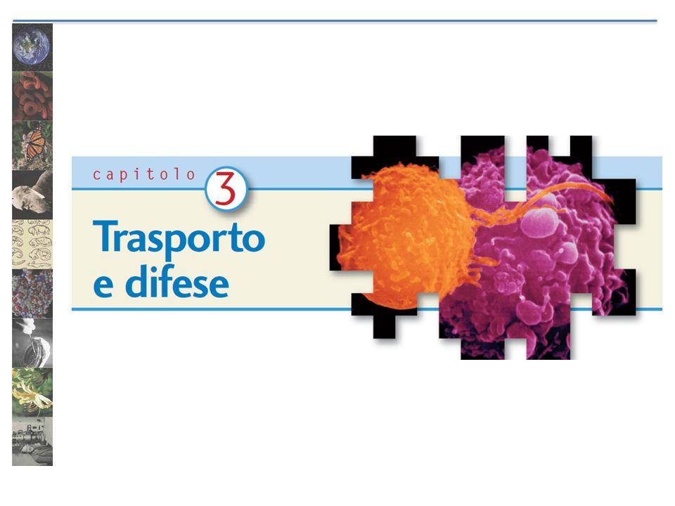 Il sangue Il sangue è formato da plasma e cellule (parte corpuscolata).