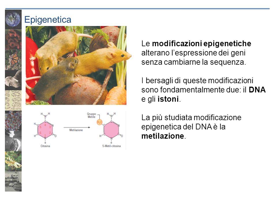 Epigenetica Le modificazioni epigenetiche alterano lespressione dei geni senza cambiarne la sequenza. I bersagli di queste modificazioni sono fondamen