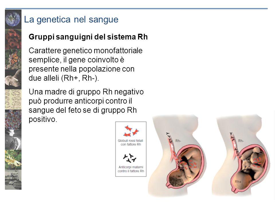 La genetica nel sangue Gruppi sanguigni del sistema Rh Carattere genetico monofattoriale semplice, il gene coinvolto è presente nella popolazione con