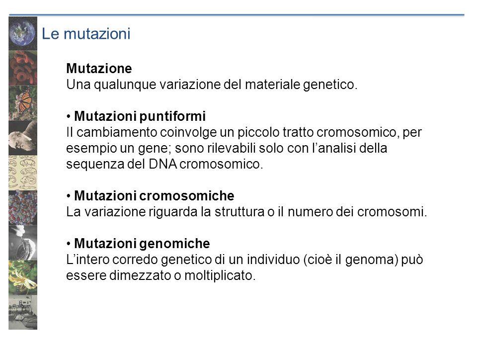 Le mutazioni Mutazione Una qualunque variazione del materiale genetico. Mutazioni puntiformi Il cambiamento coinvolge un piccolo tratto cromosomico, p