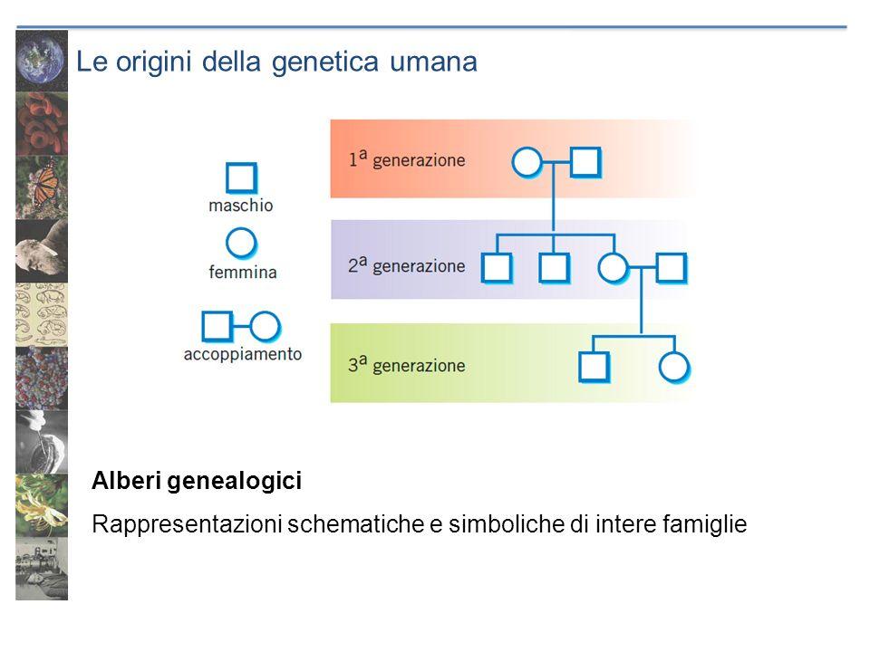 Le origini della genetica umana Alberi genealogici Rappresentazioni schematiche e simboliche di intere famiglie