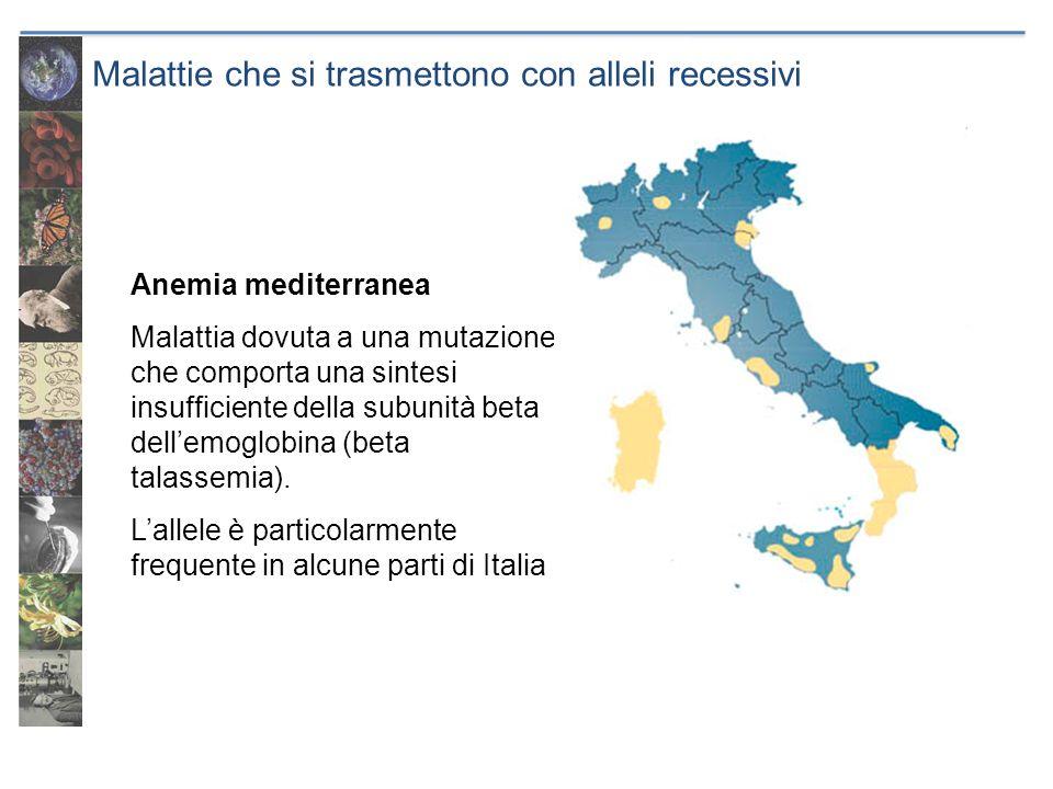 Malattie che si trasmettono con alleli recessivi Anemia mediterranea Malattia dovuta a una mutazione che comporta una sintesi insufficiente della subu