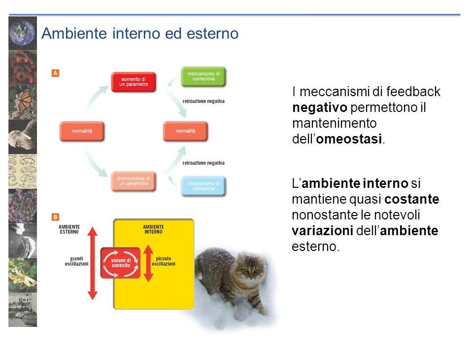 Ambiente interno ed esterno I meccanismi di feedback negativo permettono il mantenimento dellomeostasi. Lambiente interno si mantiene quasi costante n
