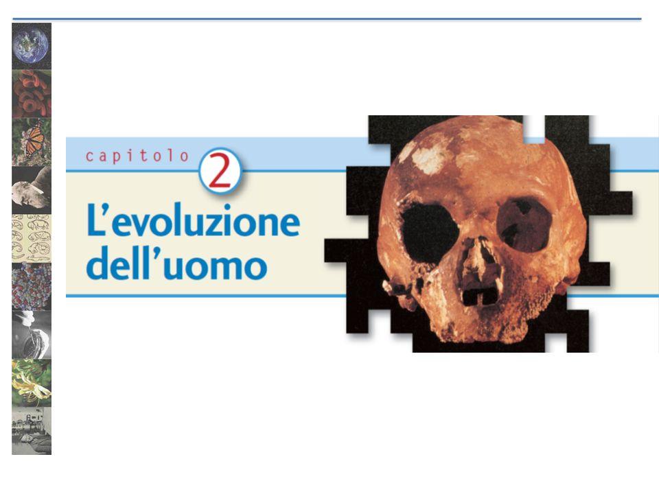 Homo sapiens: una specie unica.