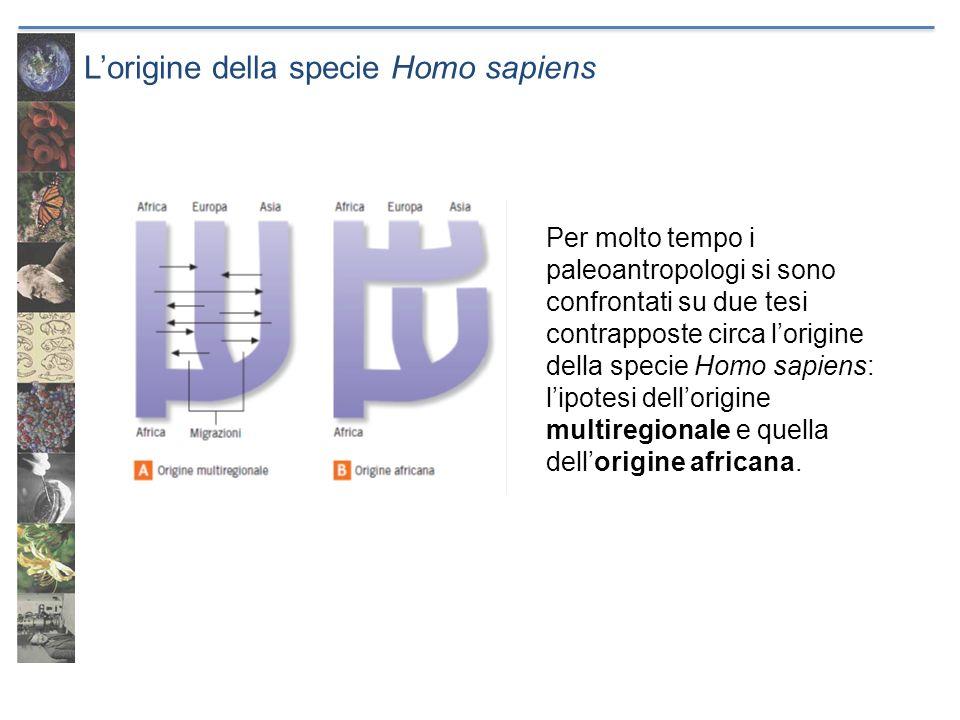 Lorigine della specie Homo sapiens Per molto tempo i paleoantropologi si sono confrontati su due tesi contrapposte circa lorigine della specie Homo sa