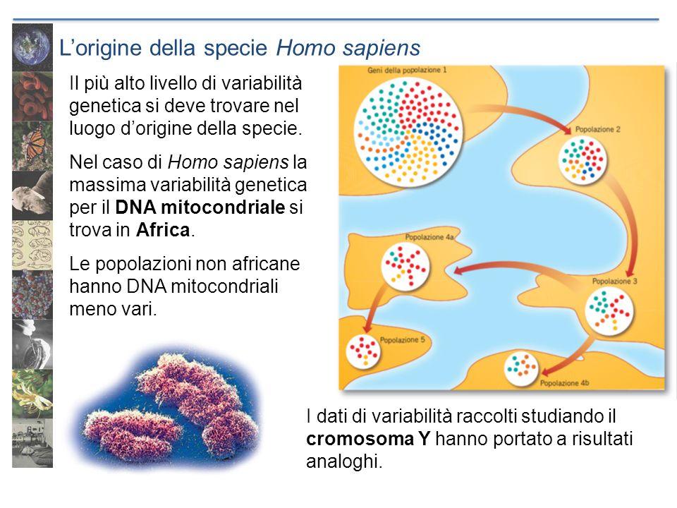 Lorigine della specie Homo sapiens Il più alto livello di variabilità genetica si deve trovare nel luogo dorigine della specie. Nel caso di Homo sapie