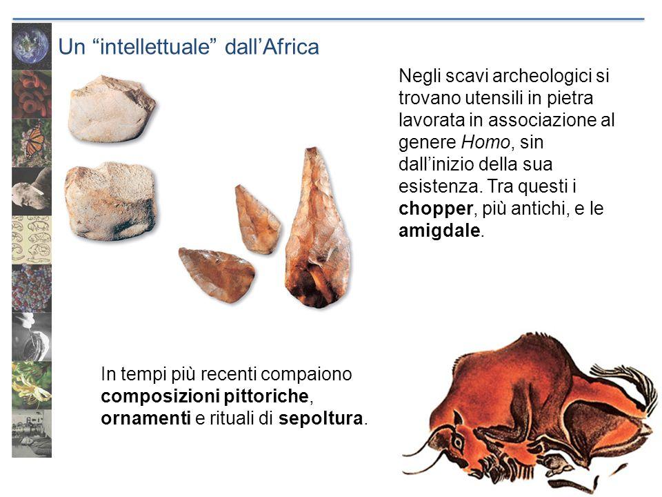 Un intellettuale dallAfrica Negli scavi archeologici si trovano utensili in pietra lavorata in associazione al genere Homo, sin dallinizio della sua e