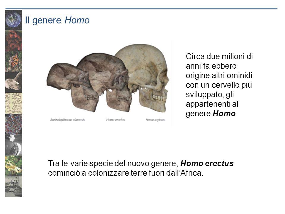Il genere Homo Tra le varie specie del nuovo genere, Homo erectus cominciò a colonizzare terre fuori dallAfrica. Circa due milioni di anni fa ebbero o