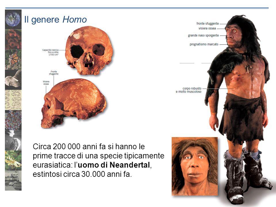 Il genere Homo Circa 200 000 anni fa si hanno le prime tracce di una specie tipicamente eurasiatica: luomo di Neandertal, estintosi circa 30.000 anni