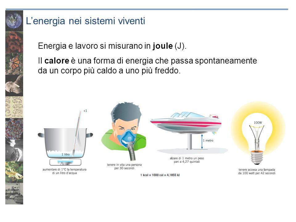 Lenergia nei sistemi viventi Energia e lavoro si misurano in joule (J). Il calore è una forma di energia che passa spontaneamente da un corpo più cald
