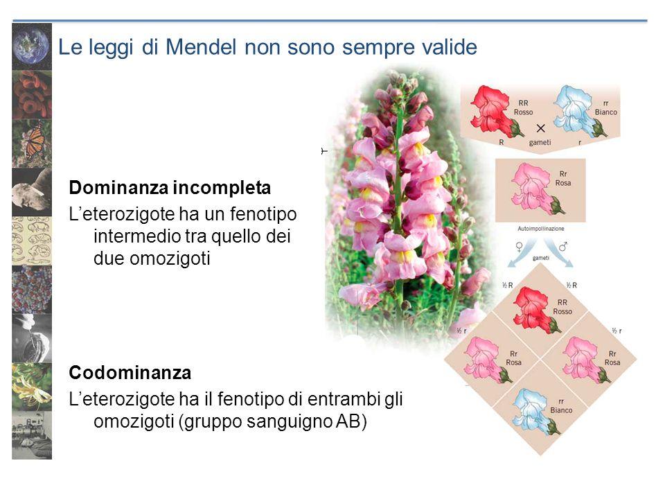 Le leggi di Mendel non sono sempre valide Dominanza incompleta Leterozigote ha un fenotipo intermedio tra quello dei due omozigoti Codominanza Leteroz