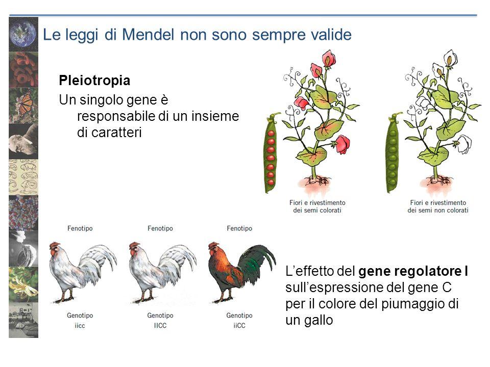 Le leggi di Mendel non sono sempre valide Pleiotropia Un singolo gene è responsabile di un insieme di caratteri Leffetto del gene regolatore I sullesp