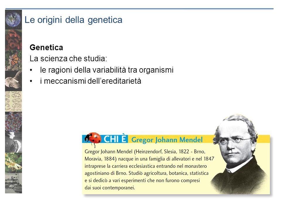 Le origini della genetica Genetica La scienza che studia: le ragioni della variabilità tra organismi i meccanismi dellereditarietà