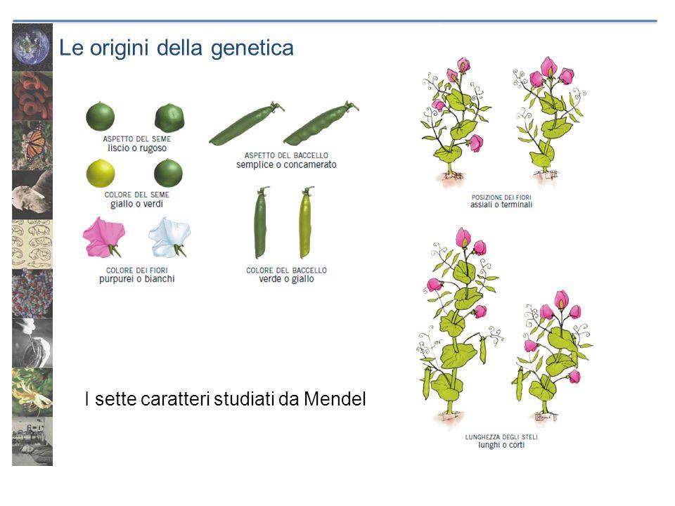 Le origini della genetica I sette caratteri studiati da Mendel