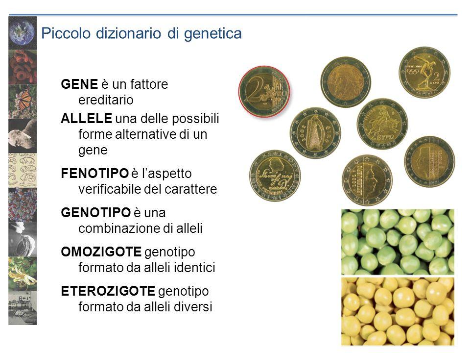 Piccolo dizionario di genetica GENE è un fattore ereditario ALLELE una delle possibili forme alternative di un gene FENOTIPO è laspetto verificabile d