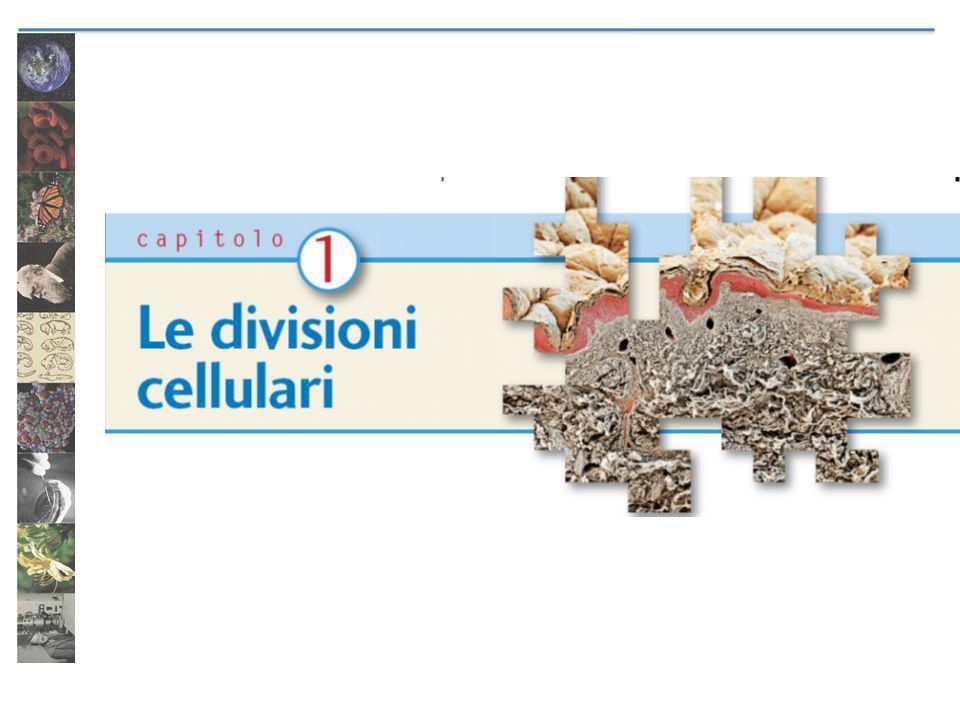 La meiosi Permette un riassortimento di caratteri attraverso: il crossing over lassortimento casuale dei cromosomi