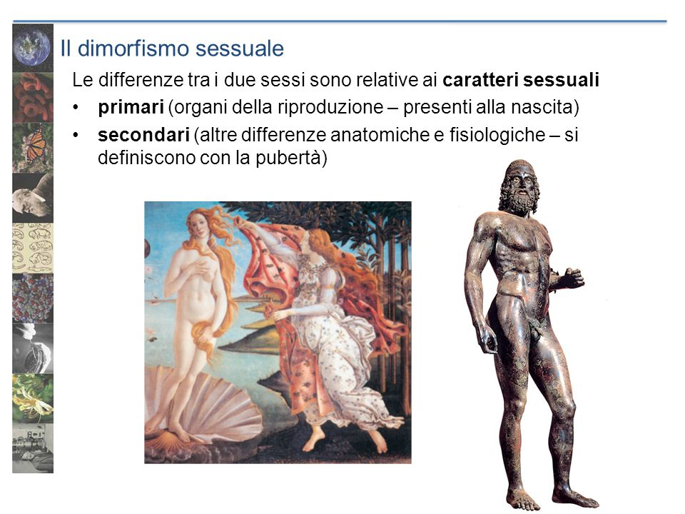 Il dimorfismo sessuale Le differenze tra i due sessi sono relative ai caratteri sessuali primari (organi della riproduzione – presenti alla nascita) s