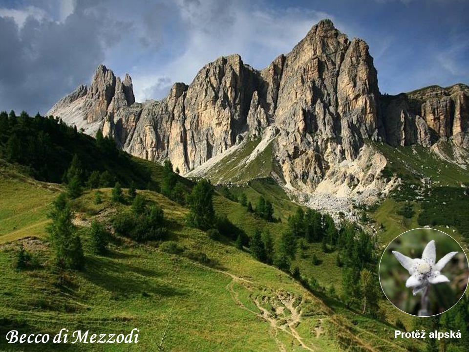 Becco di Mezzodi Protěž alpská