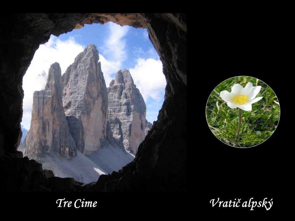 V pozadí Monte Cristallo 3221 m.n.m.