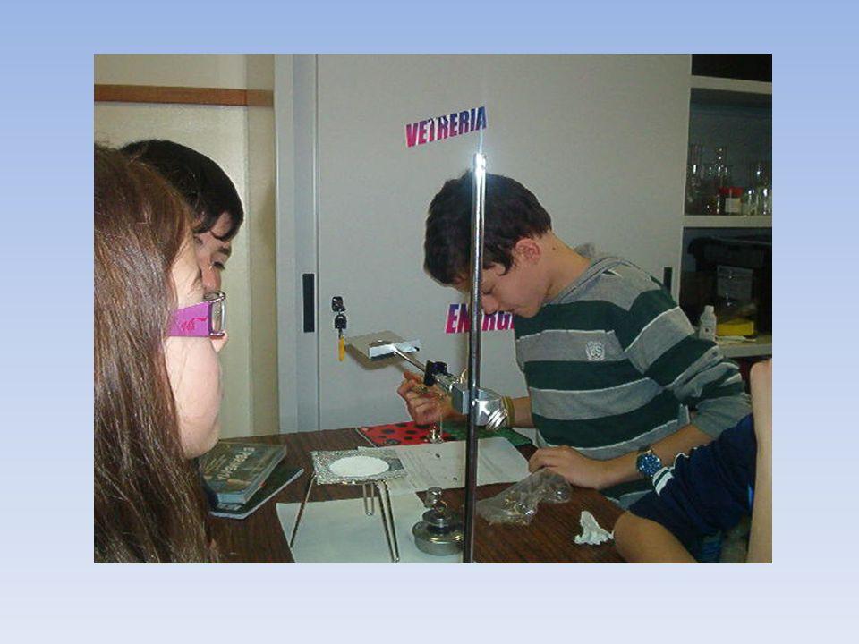 METODOLOGIA FASE DI SPERIMENTAZIONE IN LABORATORIO: Gli alunni lavorano in gruppi con la metodologia dellapprendimento cooperativo seguendo le istruzi