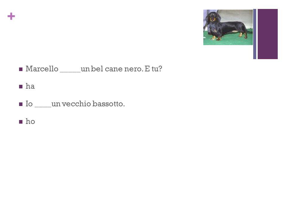+ Marcello _____un bel cane nero. E tu ha Io ____un vecchio bassotto. ho