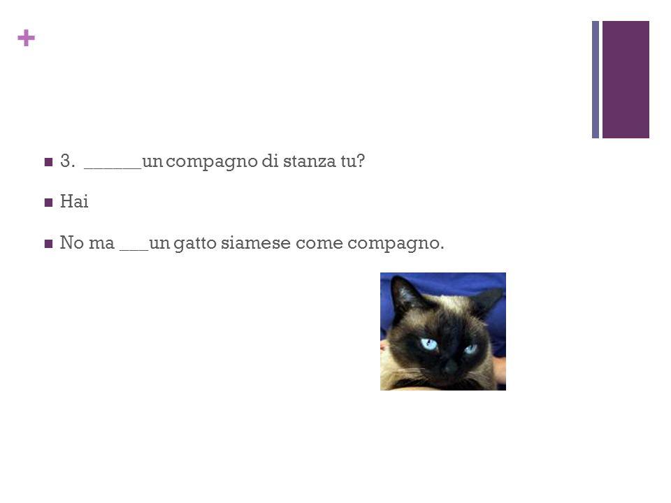 + 3. ______un compagno di stanza tu Hai No ma ___un gatto siamese come compagno.