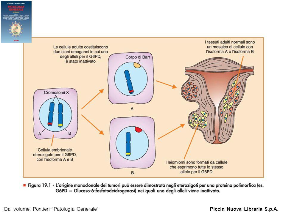 Il test di Papanicolau (Pap-test)