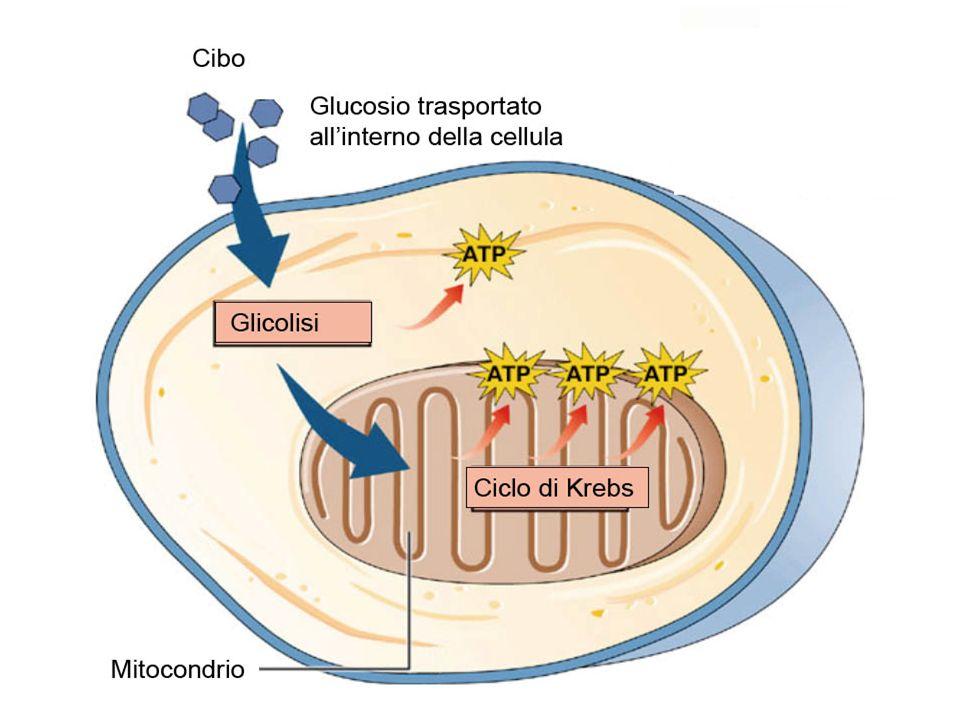 Ud'A - CdL in Scienze Motorie - AA 2002-03 [Le biomolecole] dia n. 10